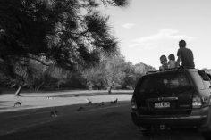 sur le chemin pour rentrer à la maison, notre activité quotidienne : observer les kangourous et les wallabies :)